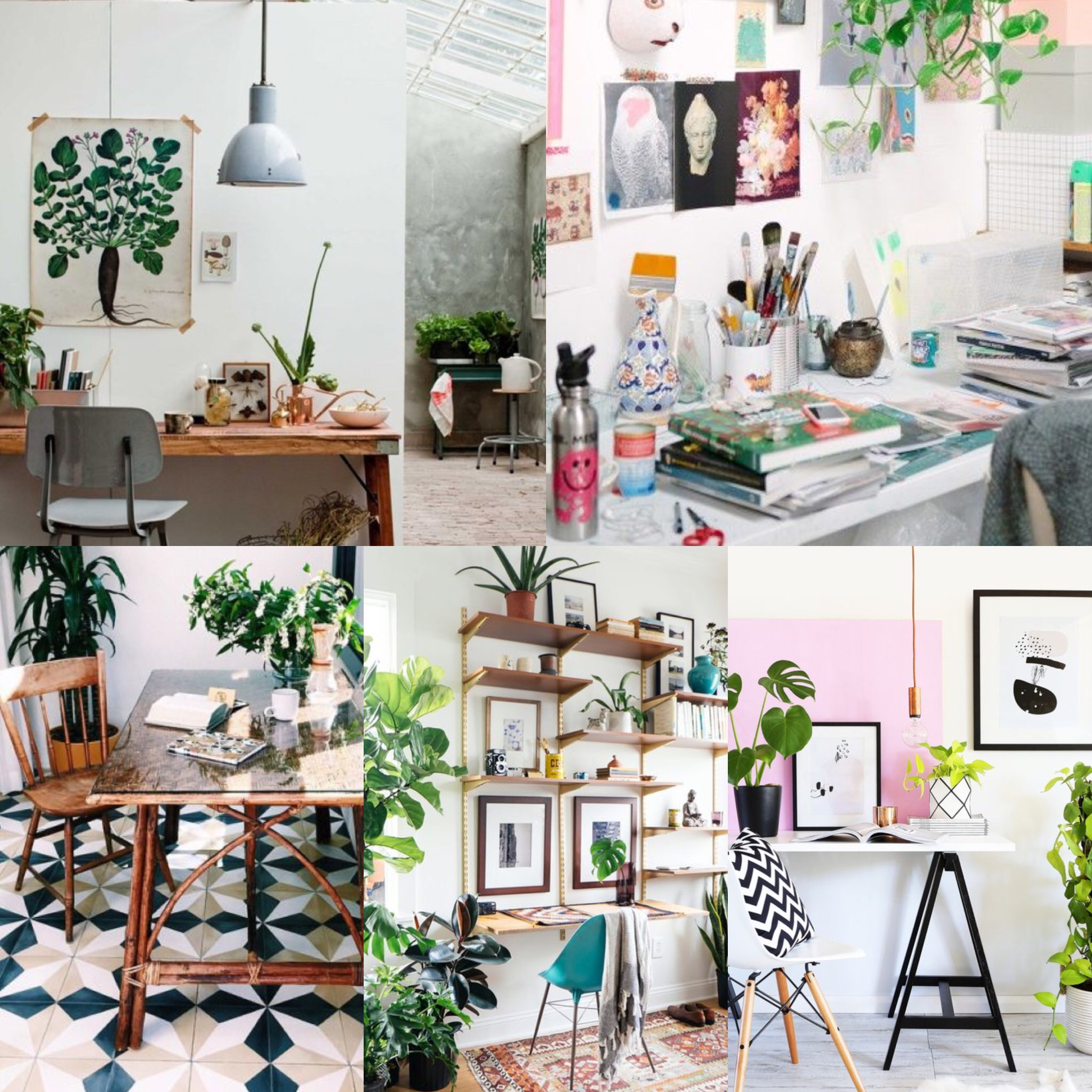 plants home office
